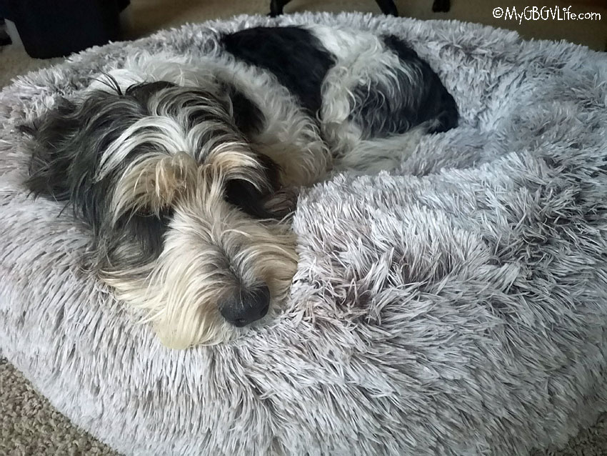 My GBGV Life Madison in fur bed