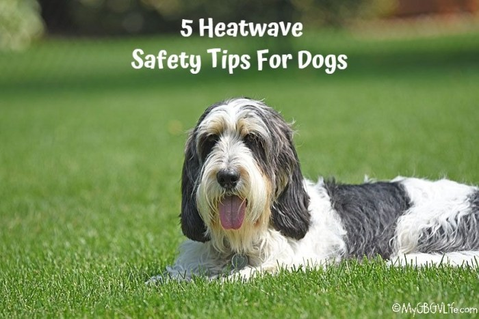 5 Heatwave Safety Tips For Dogs