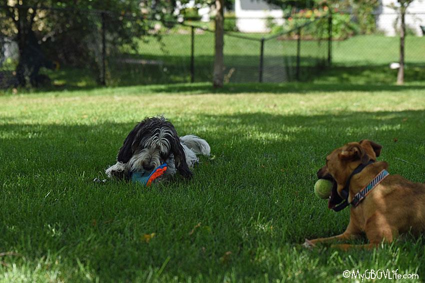 My GBGV Life stolen Frisbee