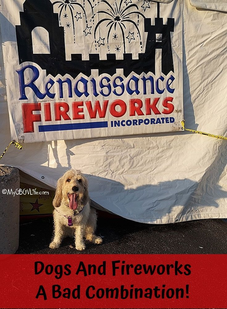 Dogs And Fireworks - A Bad Combination