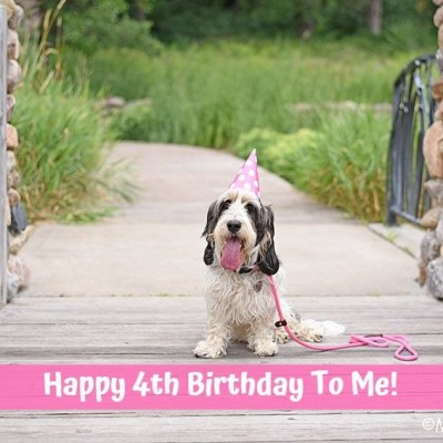Happy 4th Birthday To Madison Today!