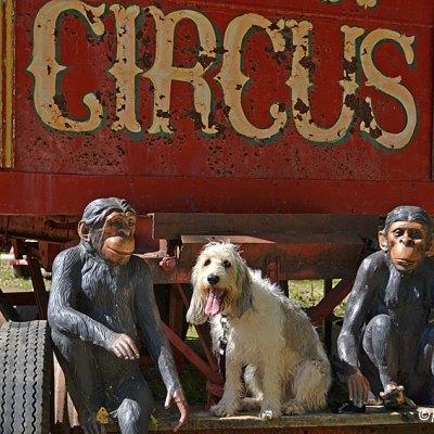 Never Be Afraid To Monkey Around Or Be Around Monkeys