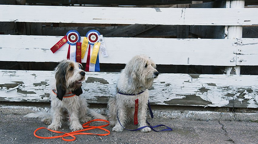 My GBGV Life Pretty Ribbons From Our Weekend Scent Work Trial