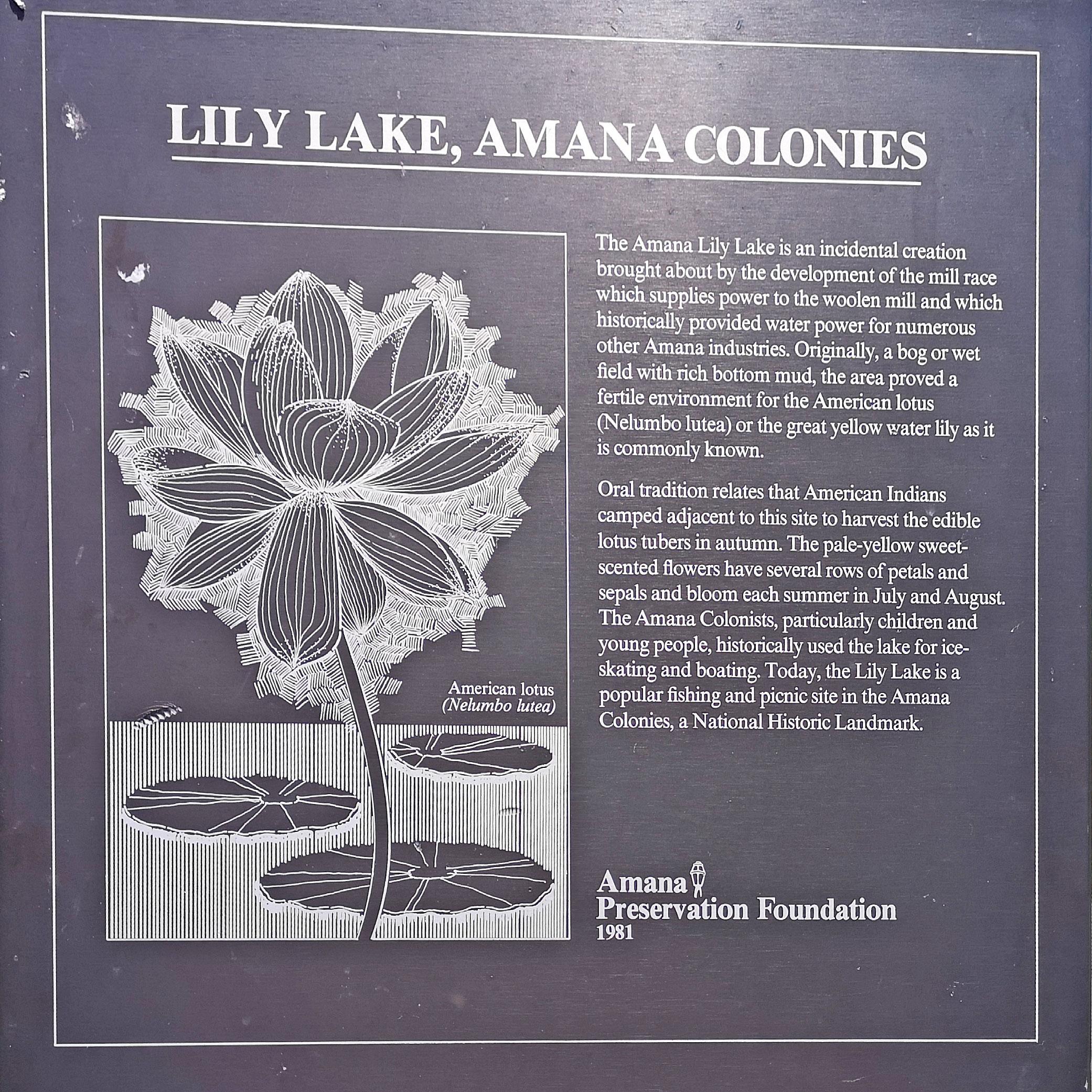 My GBGV Life lily lake