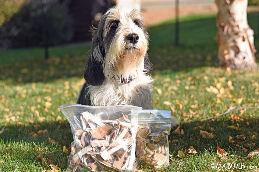 My GBGV Life We're Thankful For Healthy New Dog Treats