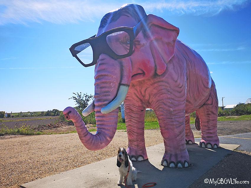 My GBGV Life pink elephant
