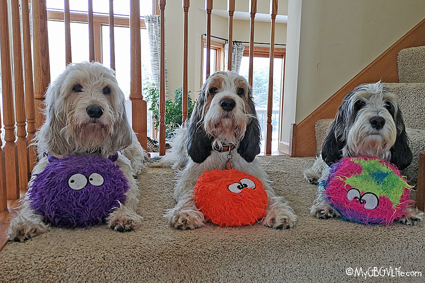 My GBGV Life Welcome To Furballz Friday With The Hounds
