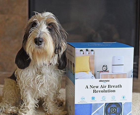 Enjoy Clean Air With The Okaysou Air Purifier