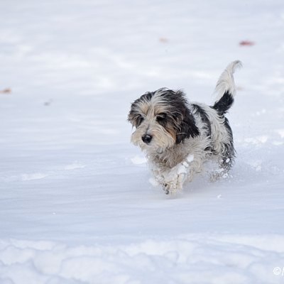 My GBGV Life Thankful To Be Dashing Through The Snow