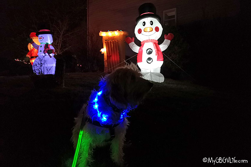 My GBGV Life Light Up Your Pup For Holiday Night Walks