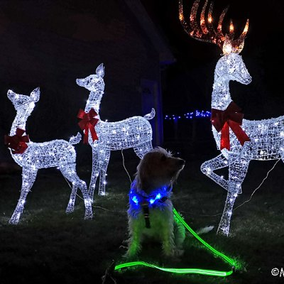 Light Up Your Pup For Holiday Night Walks