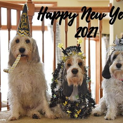Happy New Year 2021 – Please Be Nice To Us