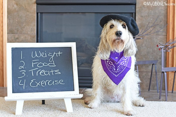 What Is The Ideal Weight For Your Dog?