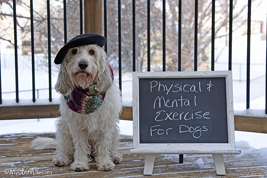 My GBGV Life Physical And Mental Exercise For Dogs Is Important!