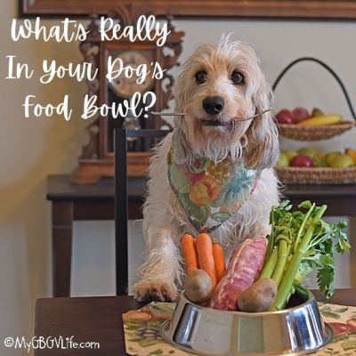 What Is In Your Dog's Food Bowl, Do You Know?