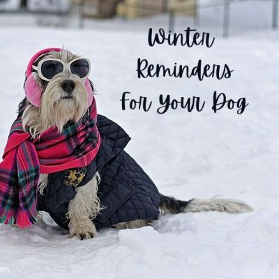 My GBGV Life Winter Reminders For You And Your Dog