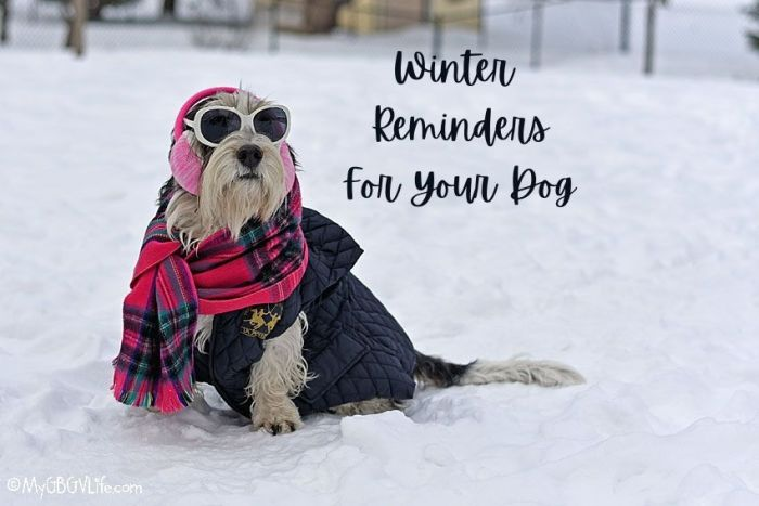 Winter Reminders For You And Your Dog
