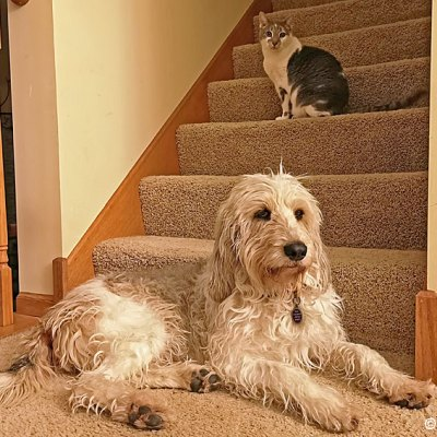 The Challenges Of House Cats For Dogs