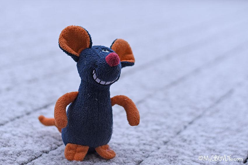 My gBGV Life rat in the snow