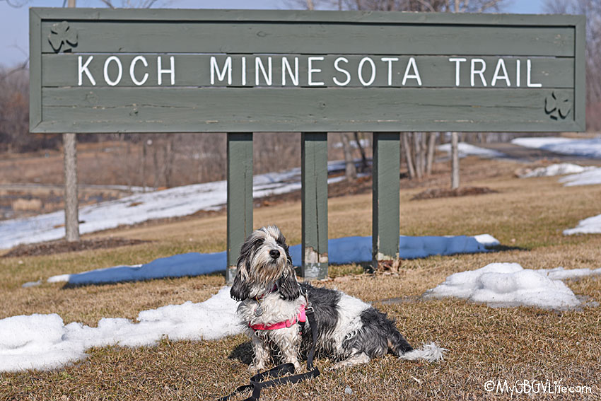 My GBGV Life A Walk On The Koch Minnesota Trail