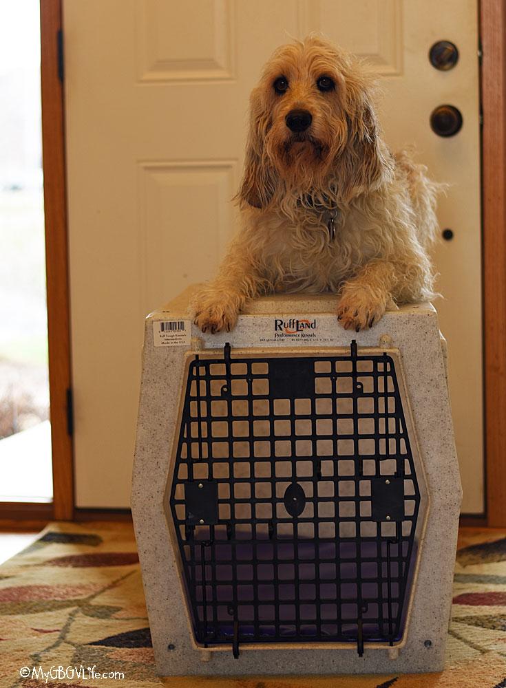 My GBGV Life Bailie on the kennel