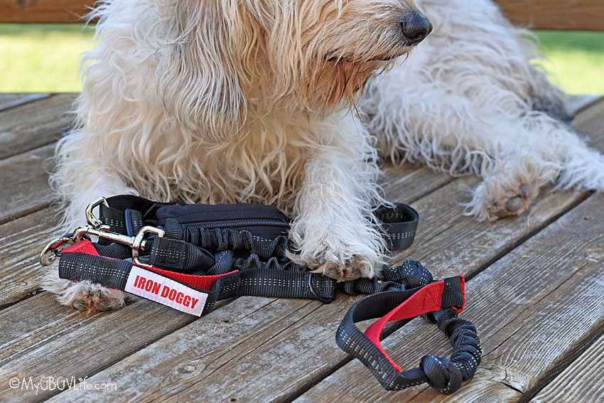 My GBGV Life We Love Our New Hands Free Running Leash