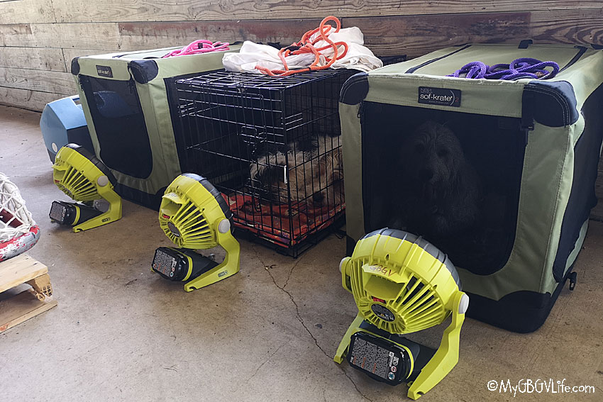 My GBGV Life in our kennels