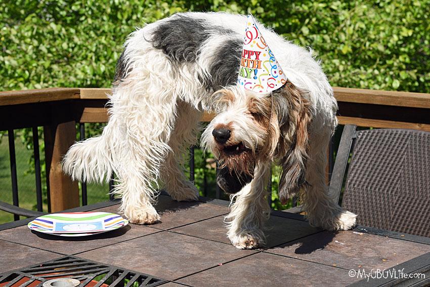 My GBGV Life It's My Party And I'll Smile If I Want To!