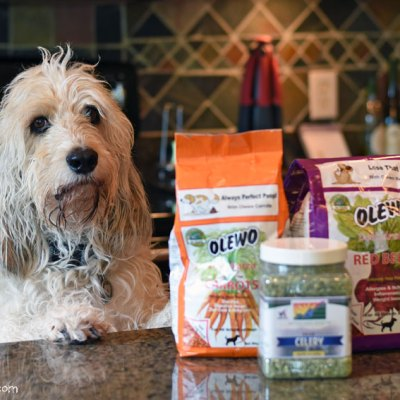 Dogs And Veggies – What You Need To Know