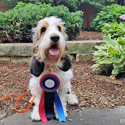 An NW3 Title For Olivia – Family Nose Work History