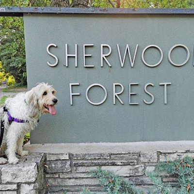 Fun Summer Finds In Sherwood Forest