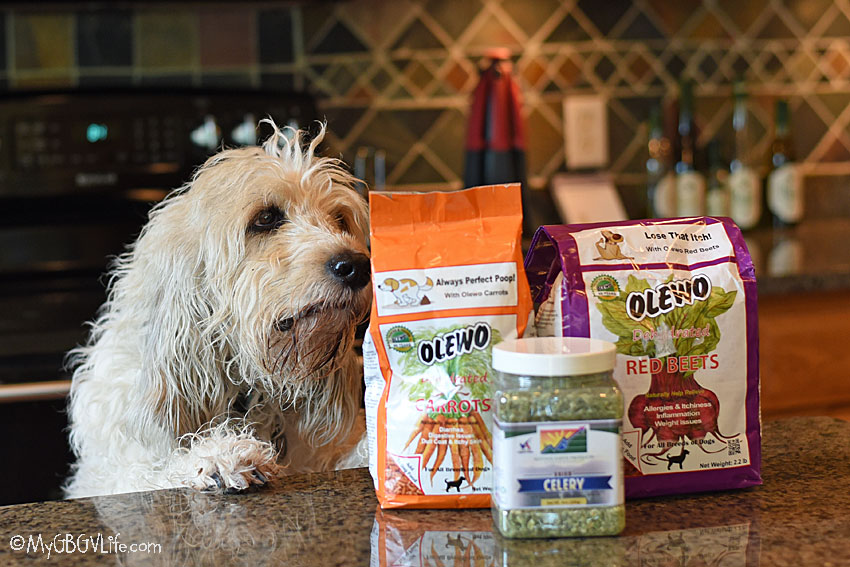 My GBGV Life Dogs And Veggies - What You Need To Know