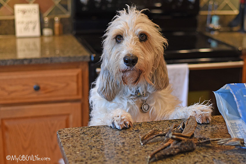 My GBGV Life Green Beef Tripe Is A Wonder Food For Dogs
