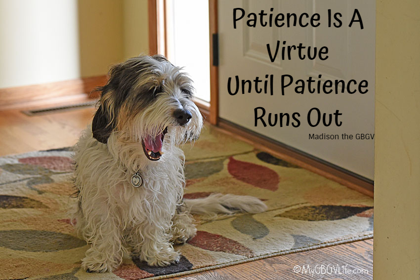 My GBGV Life Patience Is A Virtue Until Patience Runs Out
