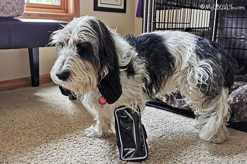 My GBGV Life cellphone holder