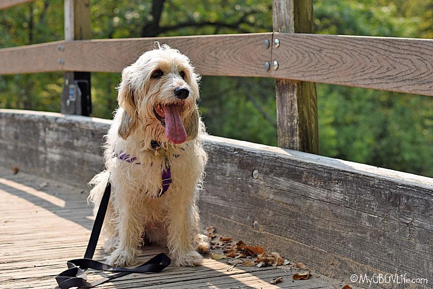 My GBGV Life Bailie on a bridge