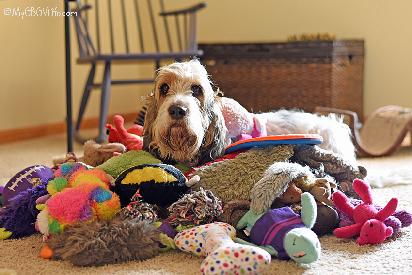 My GBGV Life too many dog toys