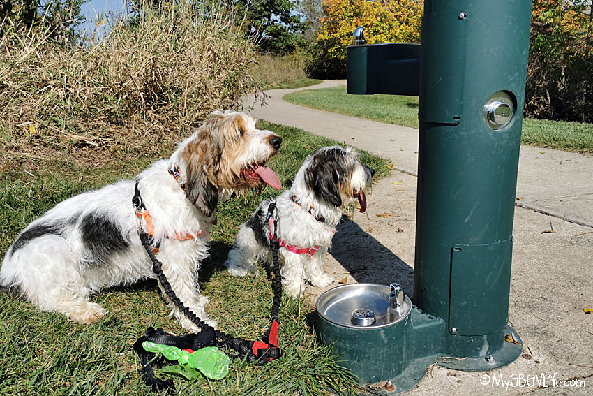 My GBGV Life Thirsty? Try A Drinking Fountain For Dogs!