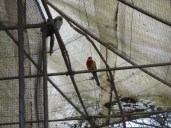 A few inhabitants of the monastery's aviary. I'm not sure how they survive the freezing weather