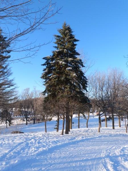 Mont Royal hiver 013