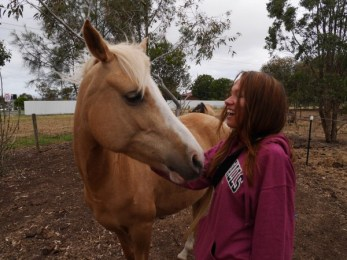 Jeune jument affectueuse (Geelong - Australie / 2015)