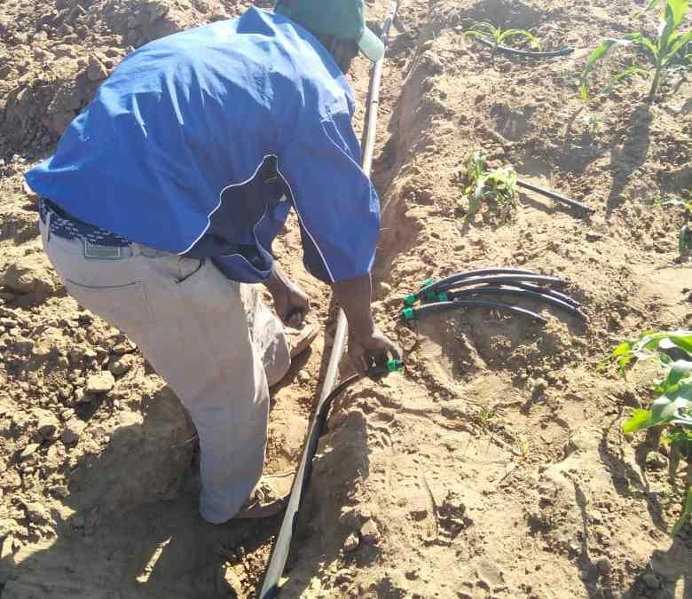 Manoti Garden Scheme Installs the Drip Irrigation System