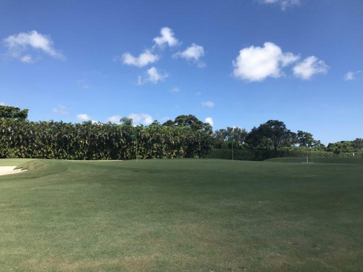 Practice area Pine Tree