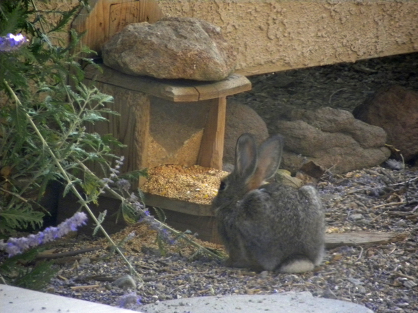 Bunny at Bird Feeder