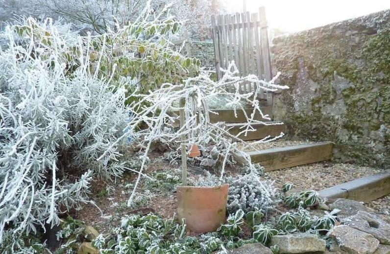 useful-tips-for-winter-lawn-care-5