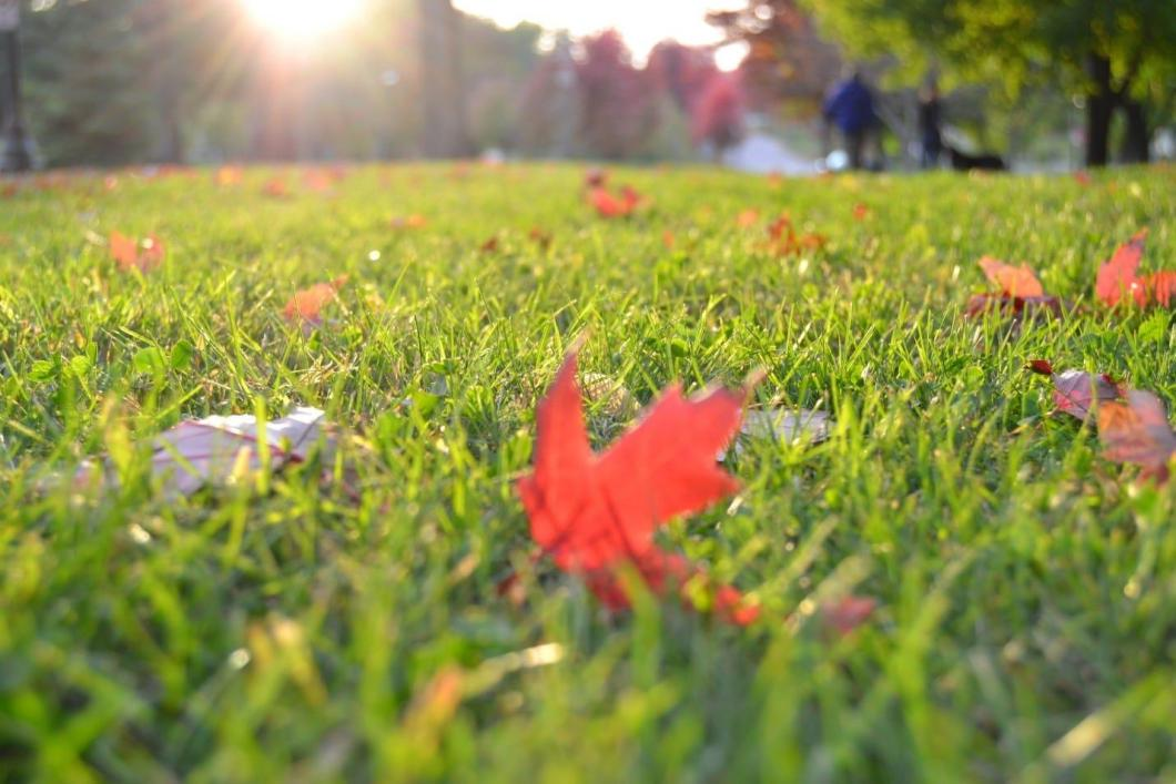 useful-tips-for-summer-lawn-care-7