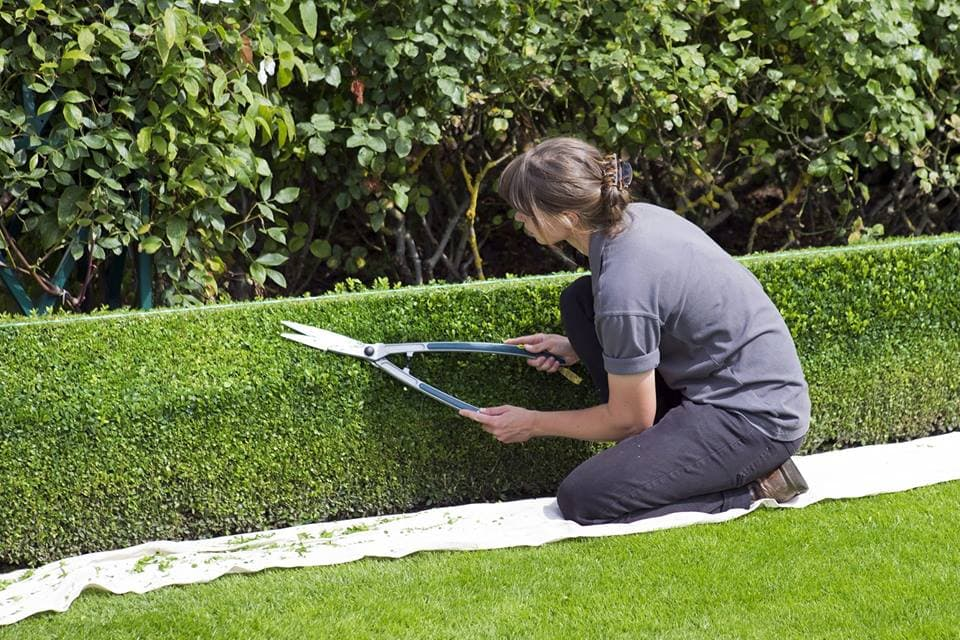 How-To-Grow-Grass-In-Shady-Areas-1