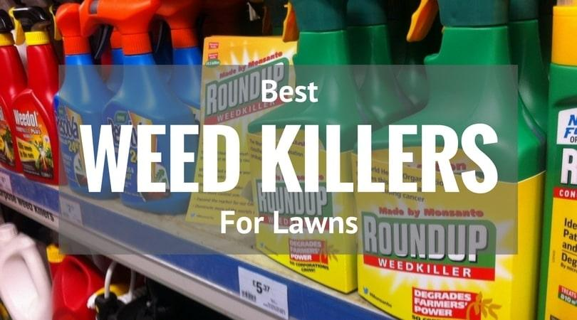 Best-Weed-Killers-for-Lawns-2017