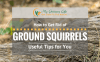 How-to-Get-Rid-of-Ground-Squirrels-1