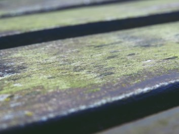 bench close up